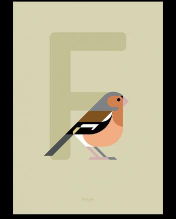 Finch bird poster