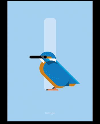 IJsvogel poster