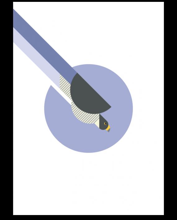 Peregrine-Falcon-poster